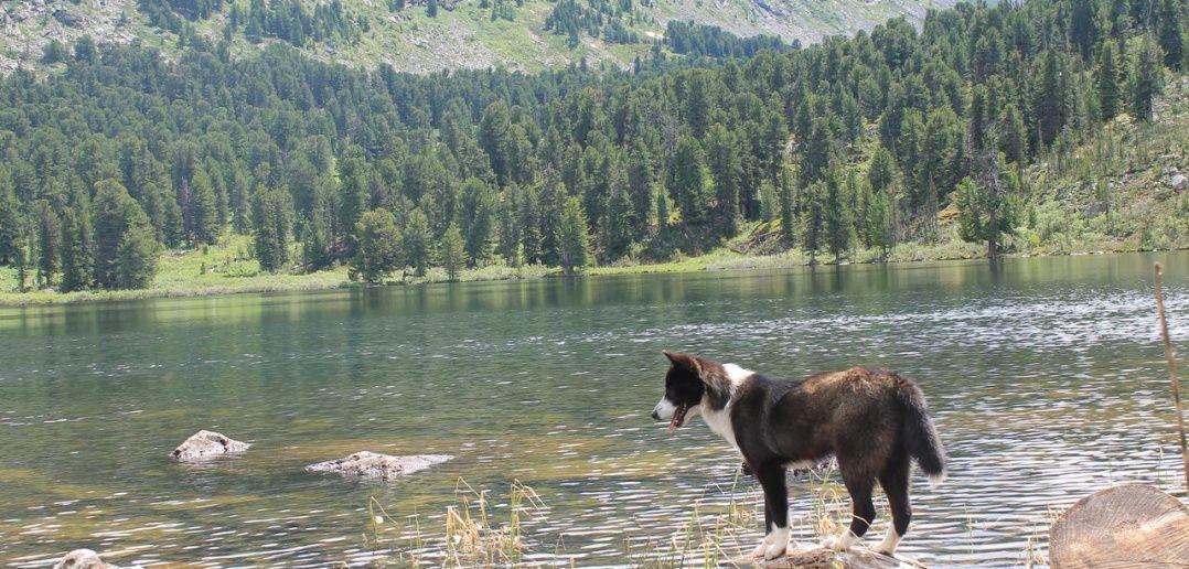 Каракольские озёра, Алтай, фото