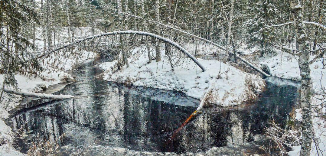 Река Сайгинка, Сайга, Томская область, фото