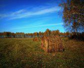 Запах сена манящий в безбрежность далеких лугов… Новосибирская область. Окрестности села Лесная Поляна   фото: Дарья Уютова