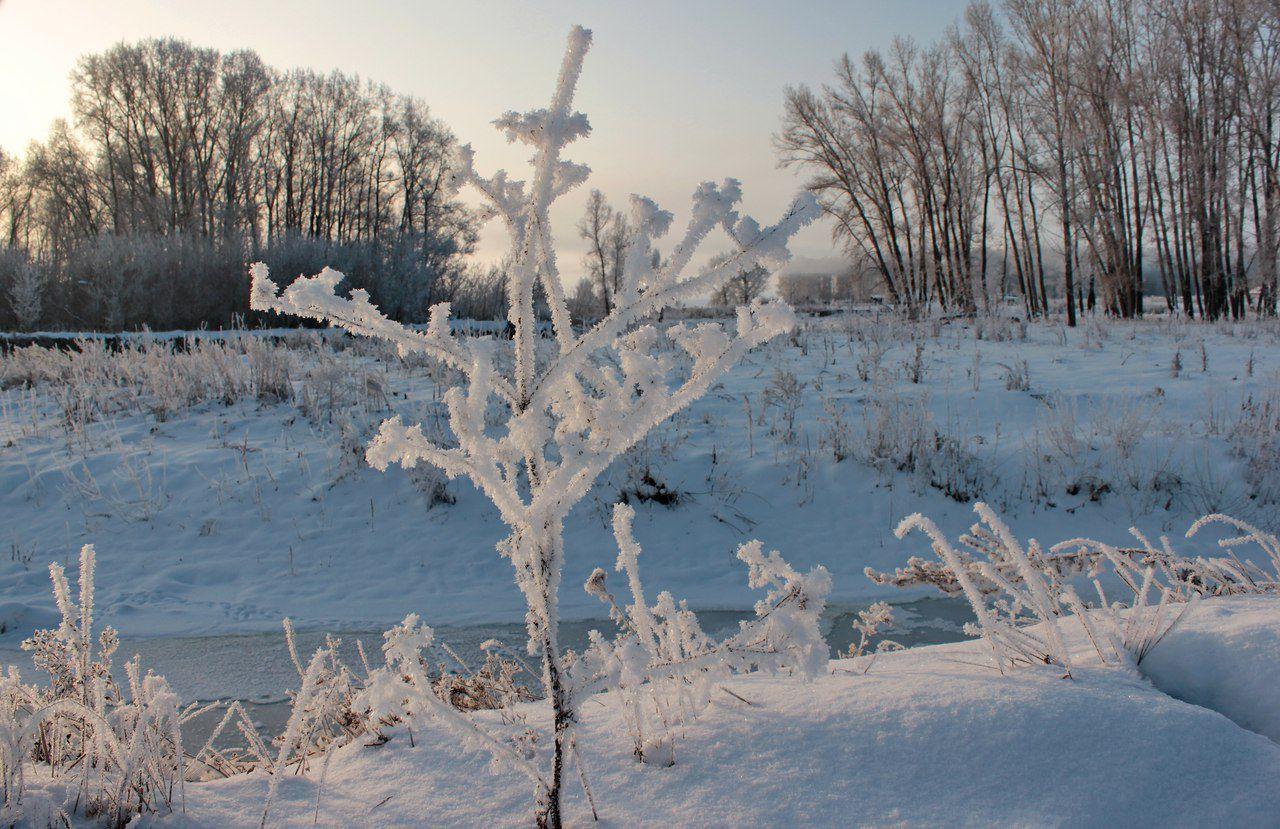 Алтайский край, Кытмановский район, фото