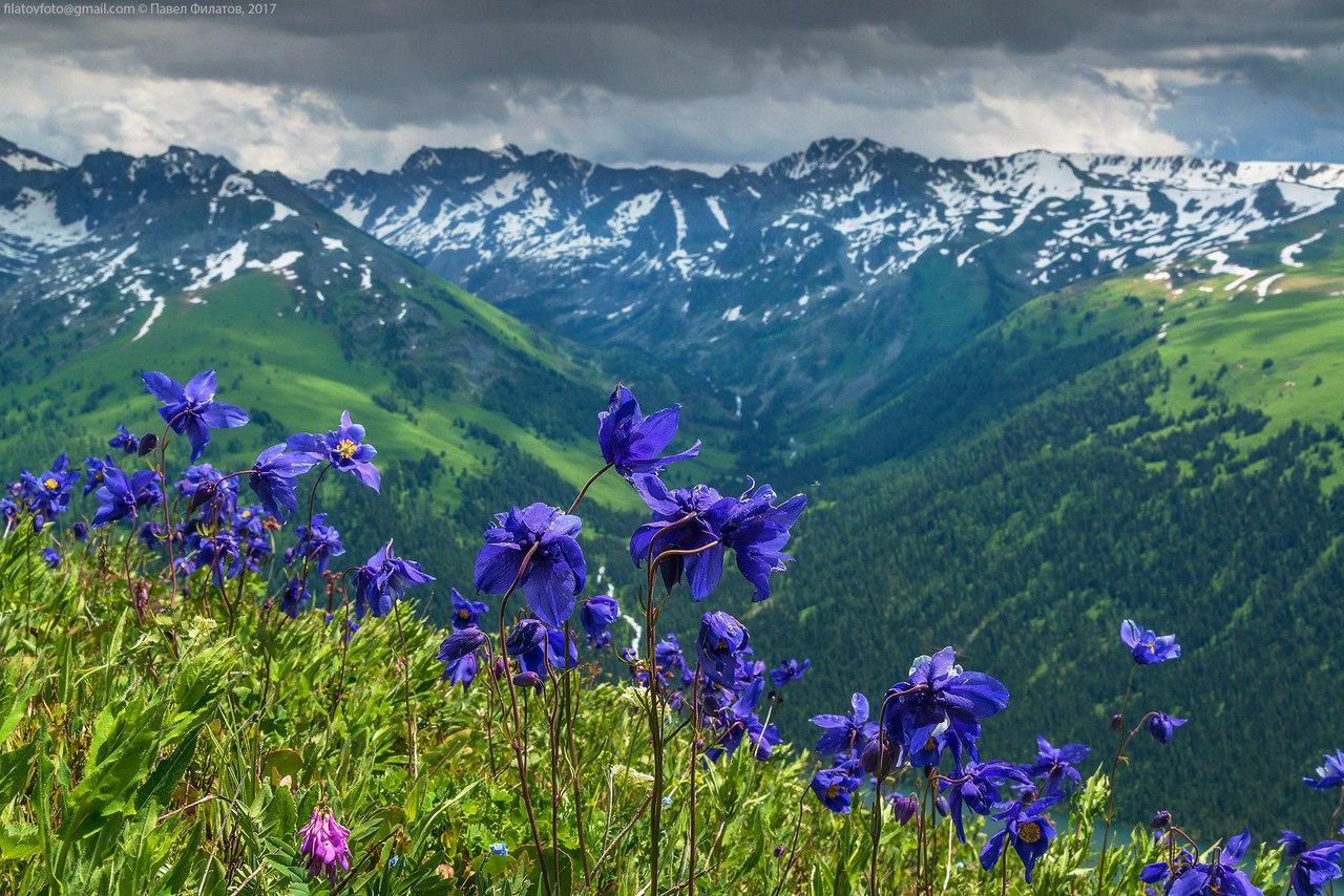 Катунский заповедник, Алтай, Фото