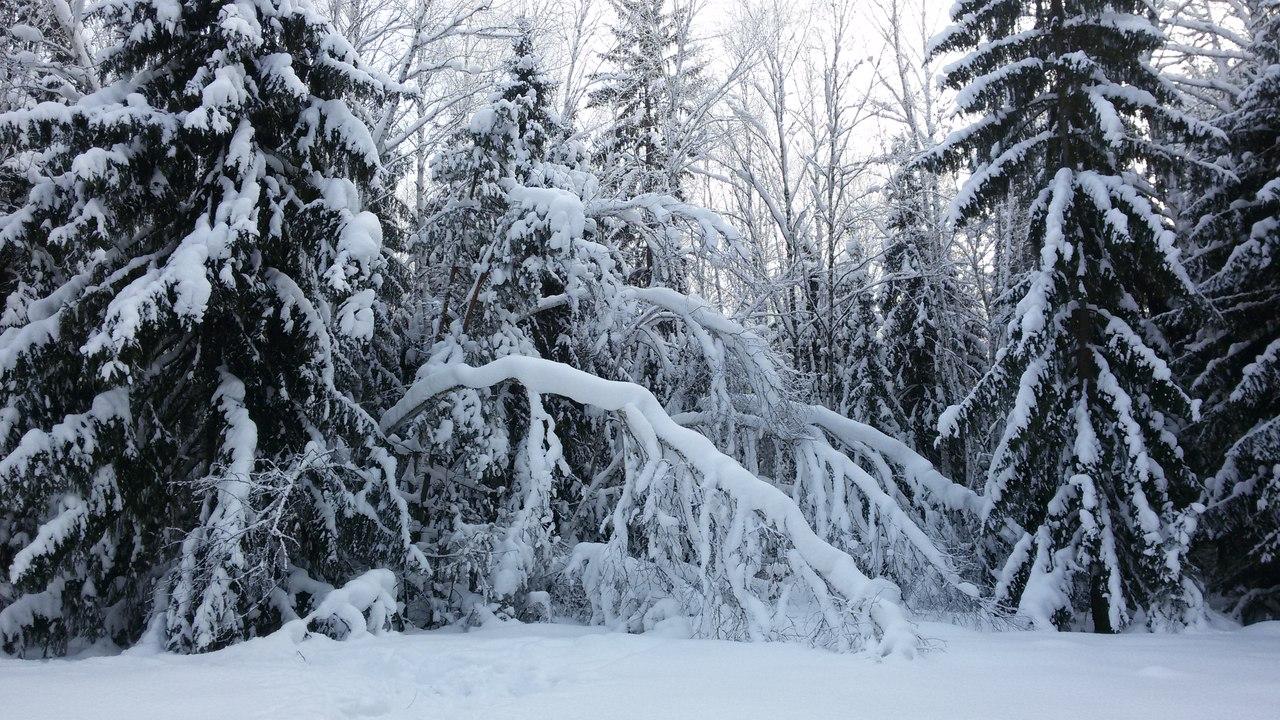 тайга, Подгородный лесхоз, Омская область, фото