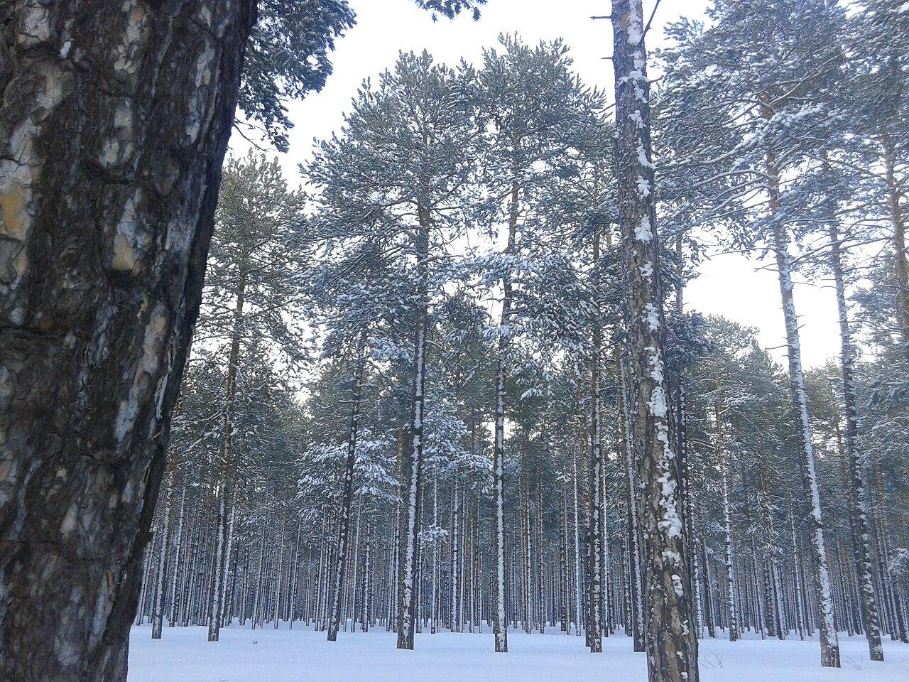 Федоровский, Ханты-Мансийский Автономный округ, фото