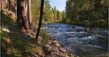 Таежная река, Фото
