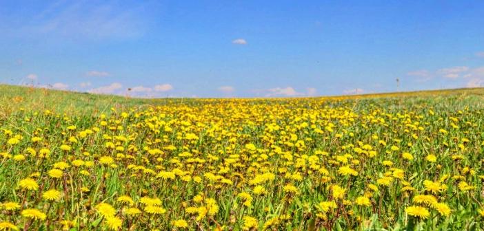 Сибирская весна. Прокопьевский район, Кемеровская область   фото: Сергей Голубцов