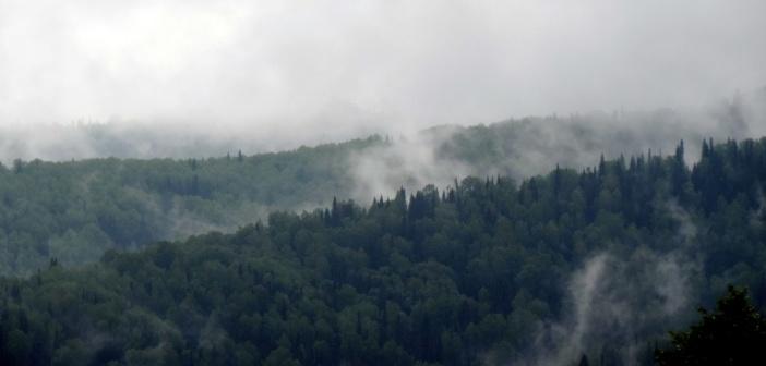 Буйство природы. Последождевая дымка… Кемеровская область, г. Междуреченск, п.Камешок.  фото: Максим Токарев