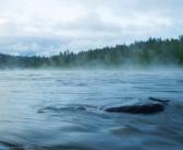 Утро на реке Ия.  Тулунский район, Иркутская область.  Фото: Максим Андреев