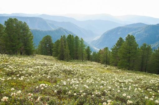 Черского, Горный хребет Хамар-Дабан, Иркутская область, Фото