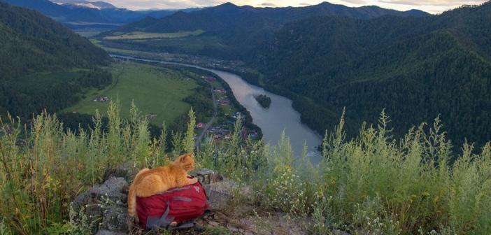 Тот случай, когда коты проводят лето лучше, чем я  Фото: Светлана Казина