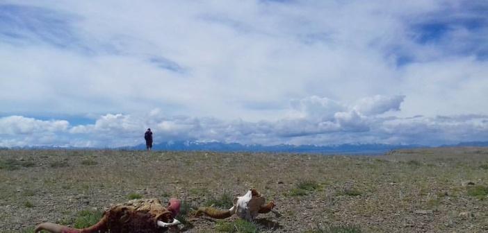 Один день в чуйской степи, Алтай Фото: Дмитрий Панков