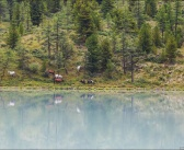 Лошади пасутся на берегу Аккемского озера, Алтай Фото: Сидонцев Александр