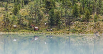 Лошади, Аккемского озера, Алтай, Фото