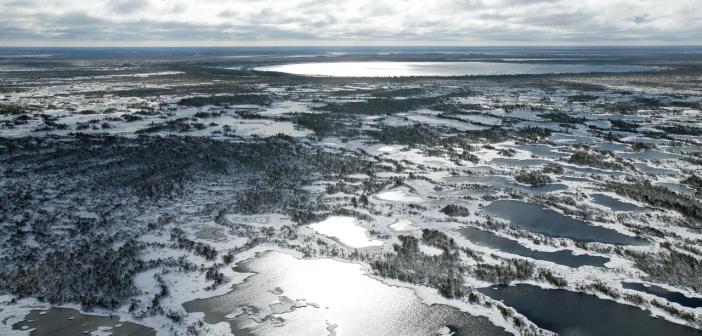 Васюганские болота, Западная Сибирь Фото: Дронов Михаил