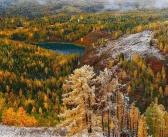 Золотая Алтайская осень  Фото: Konstantin Malanin