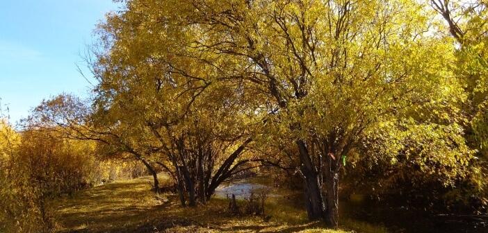 Река Анга,Ольхонский район,рядом с селом Еланцы   фото: Сан Ыч