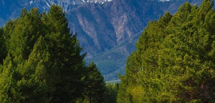 Дорога в горы.   Аршан. Саяны, Бурятия Фото: Илья Буянов