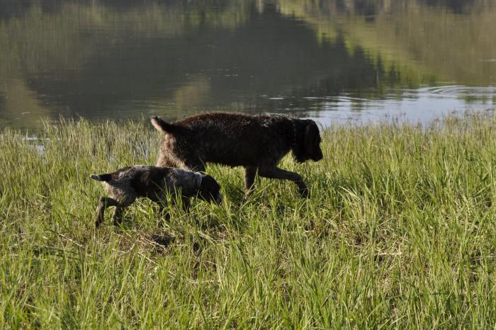 сибирская охота