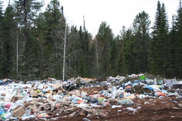 Типичная свалка мусора в лесу