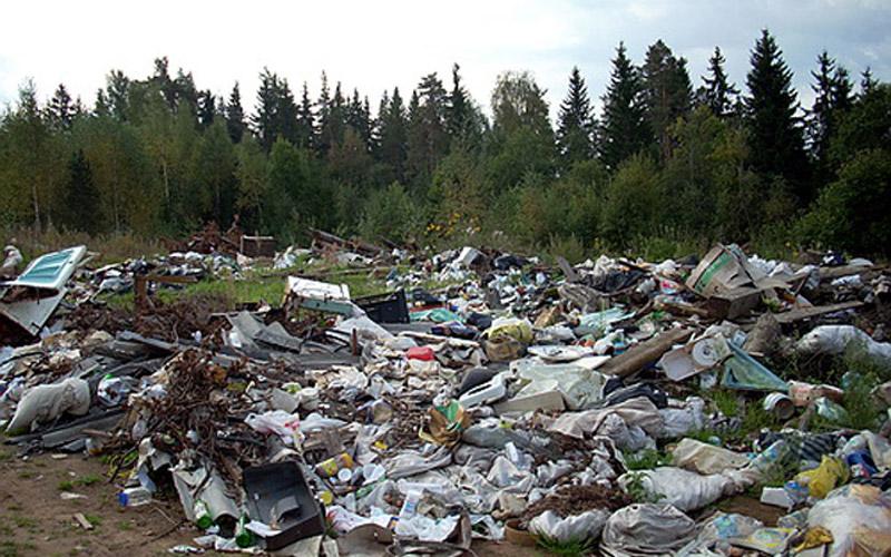Свалка мусора перед лесом