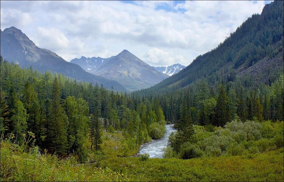 Леса Алтая