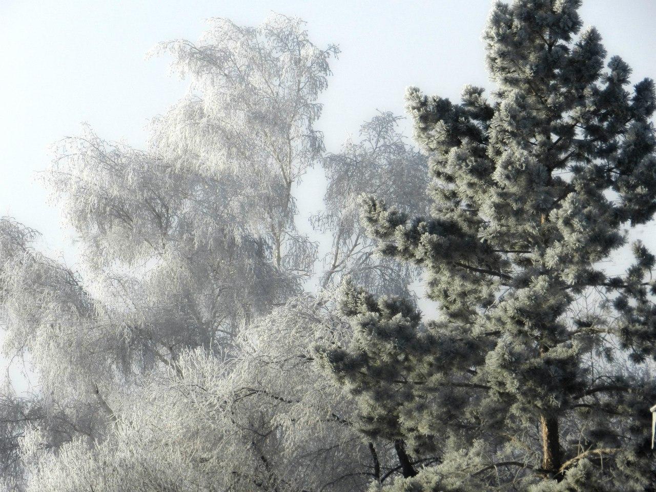 Зимнее волшебство! Фото: Алексей Ильин