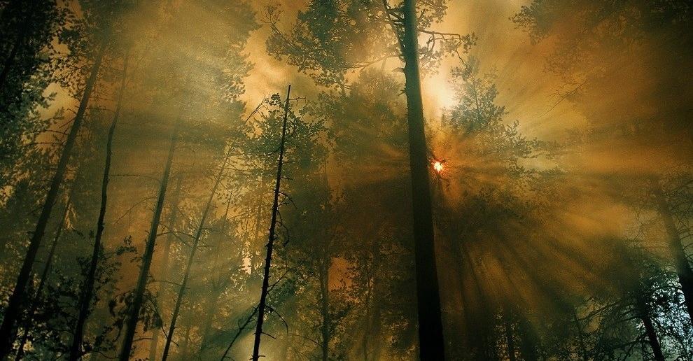 Фото сделано в Сибири фотографом National Geographic Марком Тиессеном.