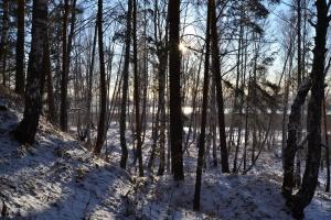 Буревестник, Томск, Фото