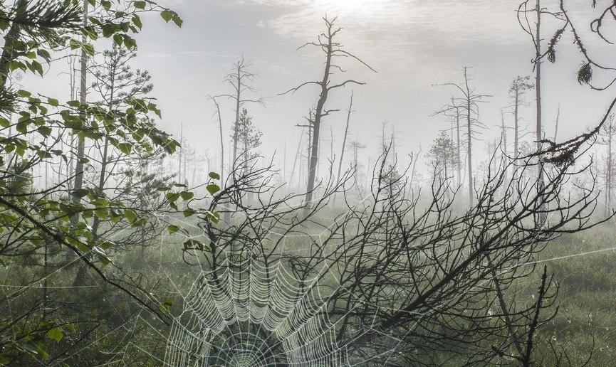 Западная Сибирь, Васюганские болота, Фото
