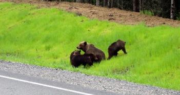 медведь, Ханты - Мансийский автономный округ, Фото