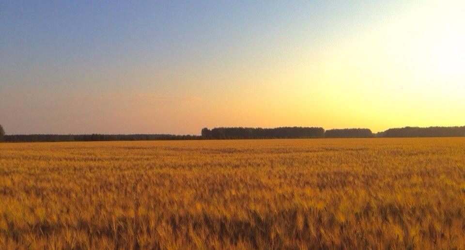 Омская область, Село Поповка, Фото